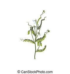 Green bush of sweet peas with small pods and leaves. Natural farm product. Leguminous plant. Flat vector icon