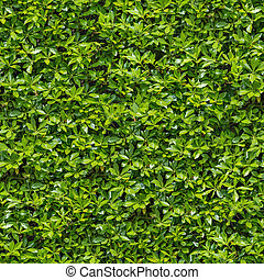 Seamless Tileable Texture of Green Bush.
