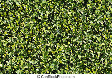 Green bush texture that perfectly loop horizontally and vertically