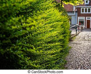 Green bushes. in Amsterdam