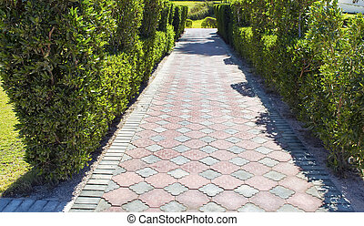 Green bushes lane