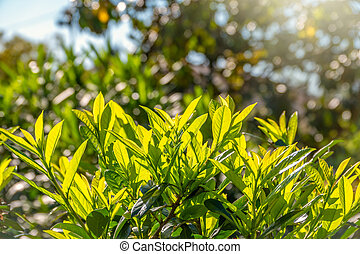Green bushes with dense branches and leaves in the light of the sun.