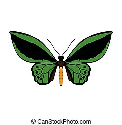 green Butterfly icon. Insect design. Vector graphic