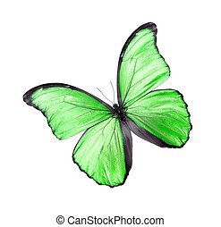 Green butterfly isolated on white - Green butterfly isolated...