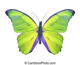 Green Butterfly Isolated on White Realistic