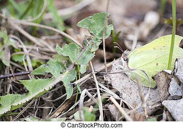 Green butterfly