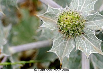 green cactus flower background wallpaper