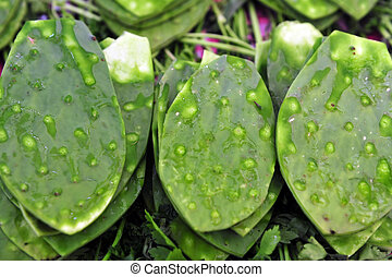 Green Cactus Leaves