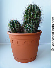 Green cactus on background blue wall