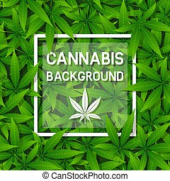 Green cannabis herb leaf background with frame