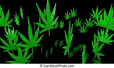 Green cannabis leaves on black
