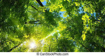 Green canopy and sun in the forest