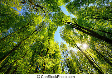 Green canopy in the forest with sun rays
