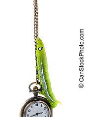 Green caterpillar climbing pocket watch, time passing concept.