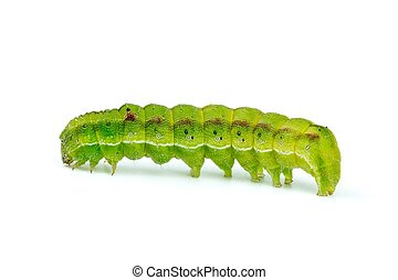 Green caterpillar isolated on the white background