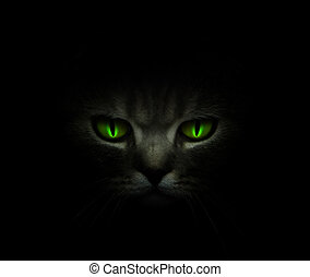 Green cat\'s eyes glowing in the dark
