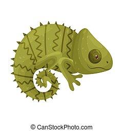Green Chameleon. Vector illustration on white background.