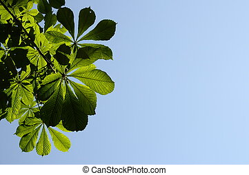 Green Chestnut leaves on blue sky background
