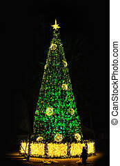 Green Christmas tree at night Park