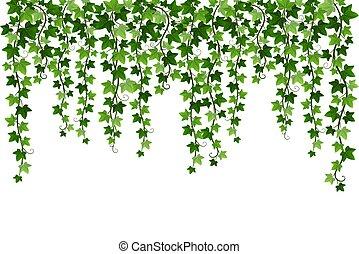 Green climbing hanging ivy creeper plant isolated on white background. Hedera vine botanical design element. Vector illustration of crawling ivy plant border