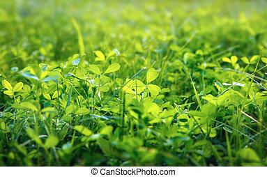 green clover background, shallow DOF