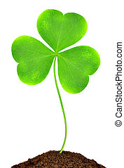 Green clover leaf on white