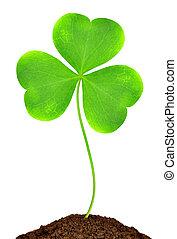 Green clover leaf on white