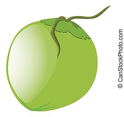 Green coconut on white background