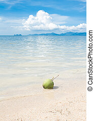 Green coconut on white beach sand