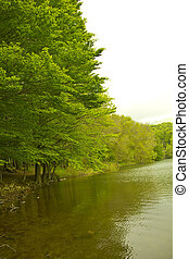 Green colors of spring in the mountain in Spain. A forest reflecting its trees in the water