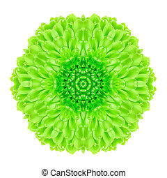 Green Concentric Flower Isolated on White. Mandala Design - ...