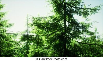 green cone trees in bright sun light