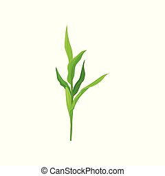 Green corn stalk vector Illustration on a white background