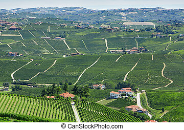 Green countryside aerial view with vineyards in Italy