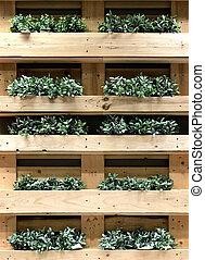 Green creeper on wooden shelf (Dischidia nummularia Variegata)
