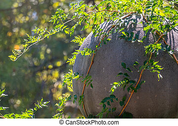Green Creeper Plant growing on a rock wall