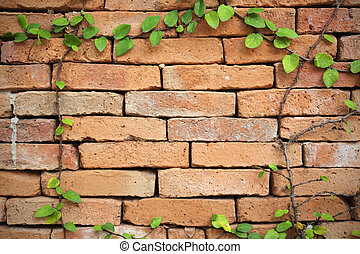 green creeper plant on a brick wall for background