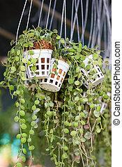 Green creeper plant.