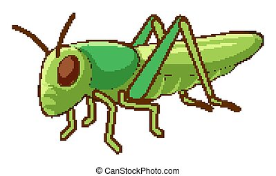 Green cricket on white background