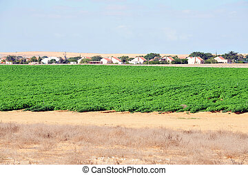 Green crops in the Negev desert Israel