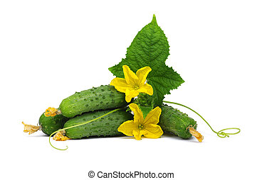 green cucumber\