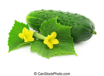 green cucumber vegetable fruit isolated