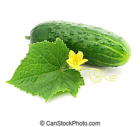 green cucumber vegetable fruit with leafs isolated on white...