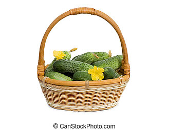 Green cucumber vegetable with flowers isolated