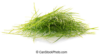 Green cutaway grass isolated on white background