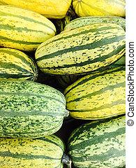Green Delicata squash