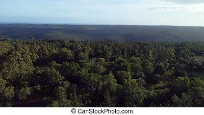 Green dense forest 4k - Aerial of green dense forest 4k