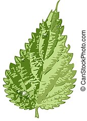 green detailed leaf