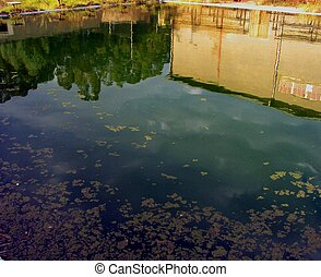 Green dirty water. - Green dirty water in old pool with...