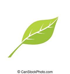 Green eco leaf